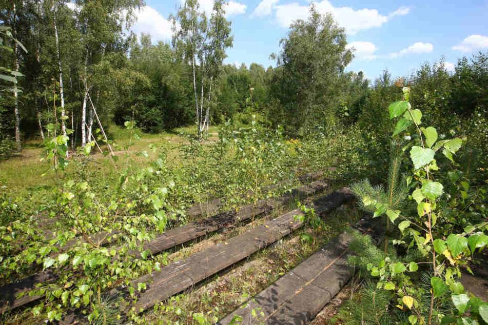 Aktueller Zustand - die Karl-May-Bühne am Stausee Oberwald ist  zugewuchert und verfallen.