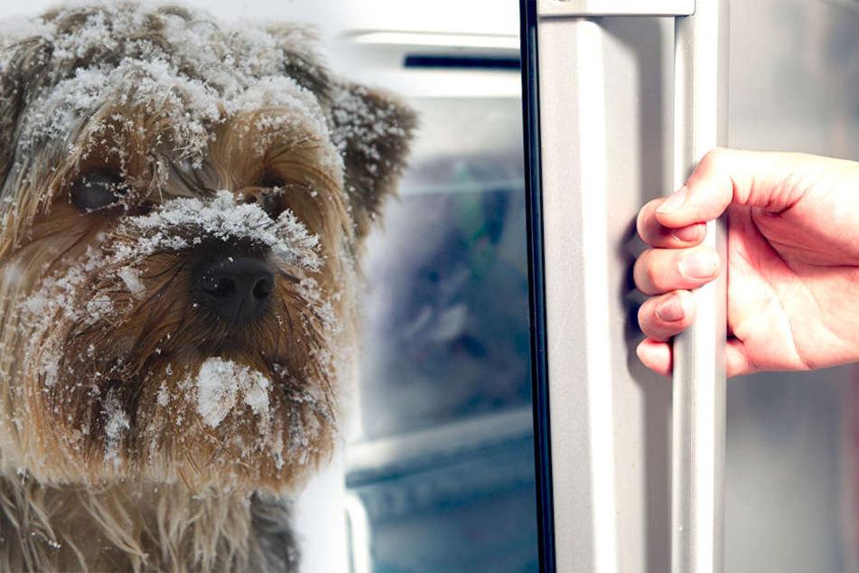 Grausam! Tierquäler steckt Hund in Eisfach