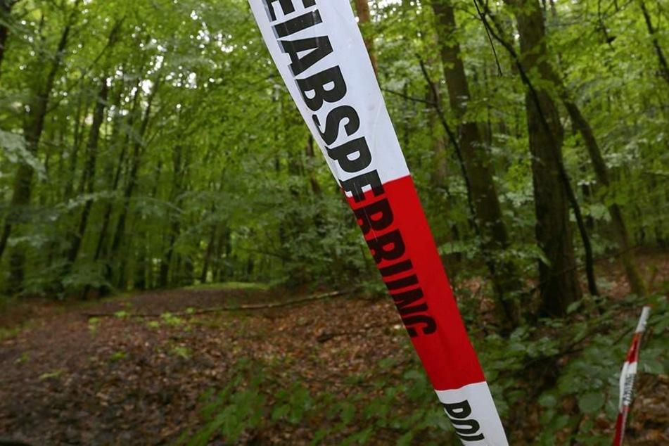 Horror-Fund im Wald: Leiche von Vermisster entdeckt?