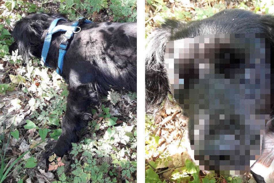 Tote Hündin in Wald entdeckt, Besitzerin wollte Kadaver nicht abholen