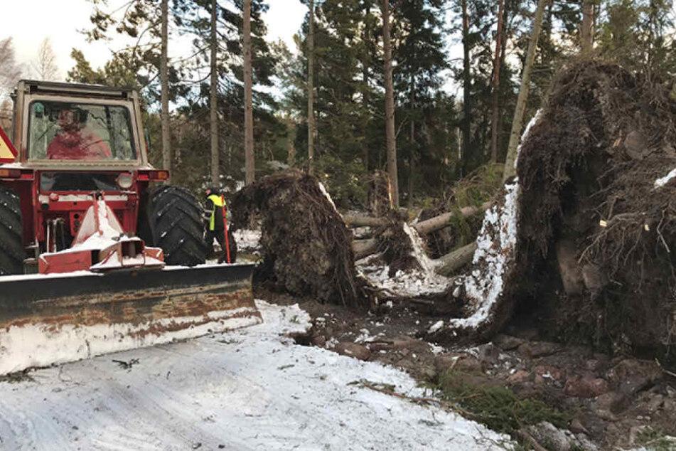 """Der Sturm """"Alfrida"""" hat in Dänemark großen Schaden angerichtet."""