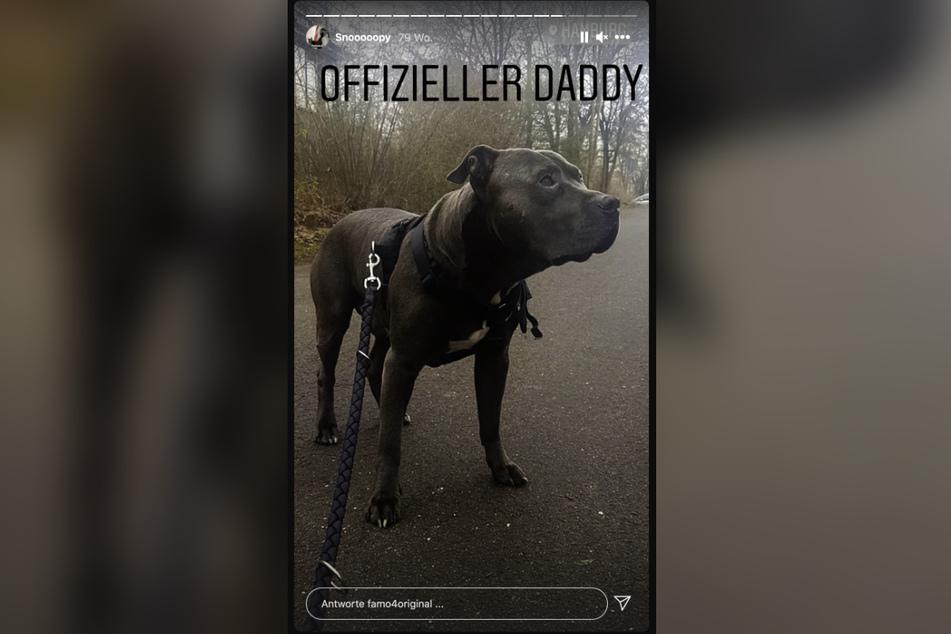 Auf Instagram zeigt FaMo seinen Hund, dessen Nachwuchs er verkaufen wollte.