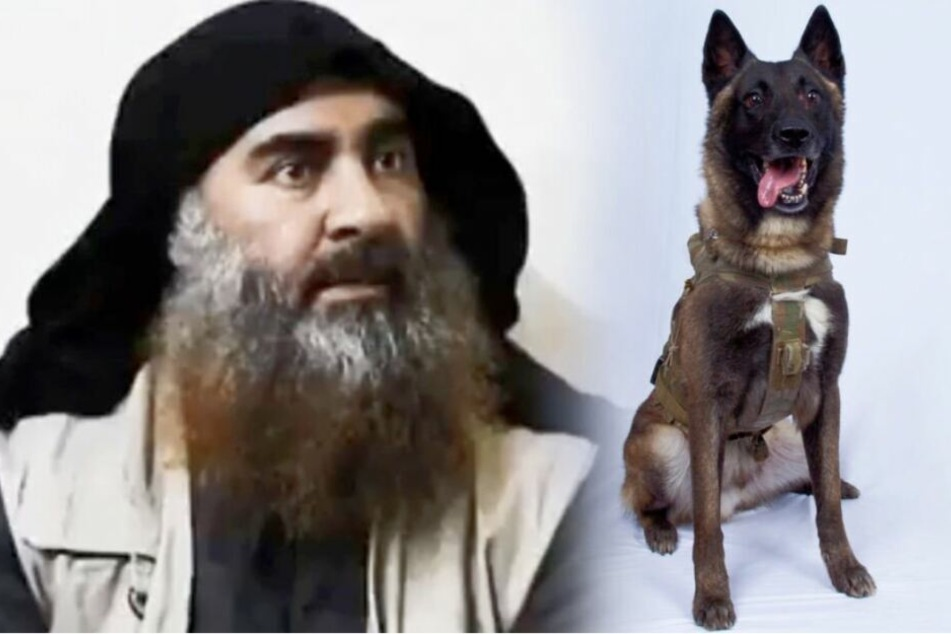Dieser Schäferhund jagte den IS-Chef in den Tod
