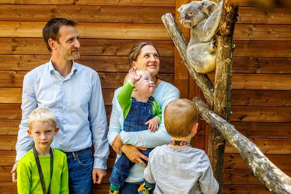Sie machten die Besucher-Halbe-Million so früh wie nie voll: Eine Exklusiv-Audienz bei den Koalas und eine Jahreskarte gewann Familie Rotsch aus Moritzburg.