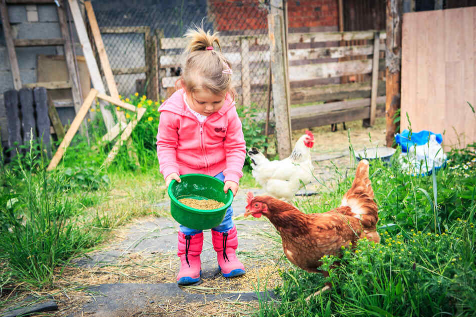 Viele Eltern wollen mit ihren Kindern die Herbstferien im Corona-Jahr auf dem Bauernhof verbringen.