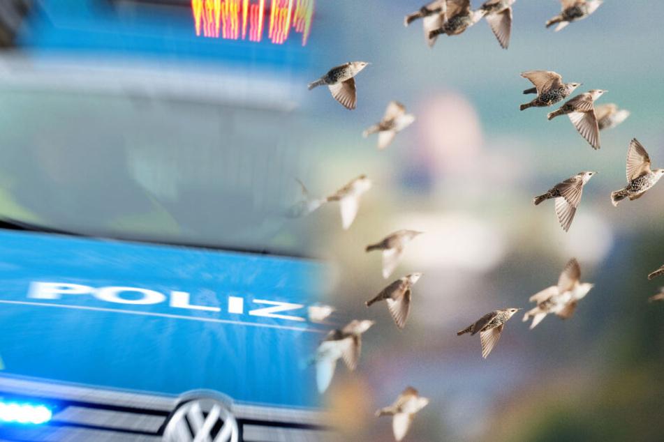Vogelschwarm kracht in Autos: Fahrer steigen auf Autobahn aus, um zu helfen!