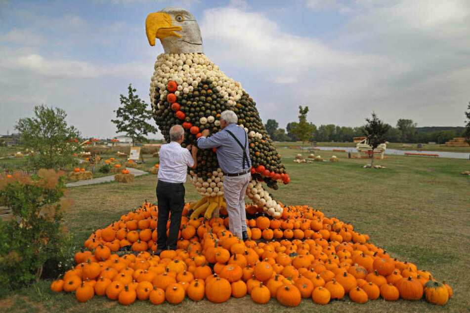 Mitarbeiter des Krewelshofes befestigen an einer Adlerfigur Kürbisse.