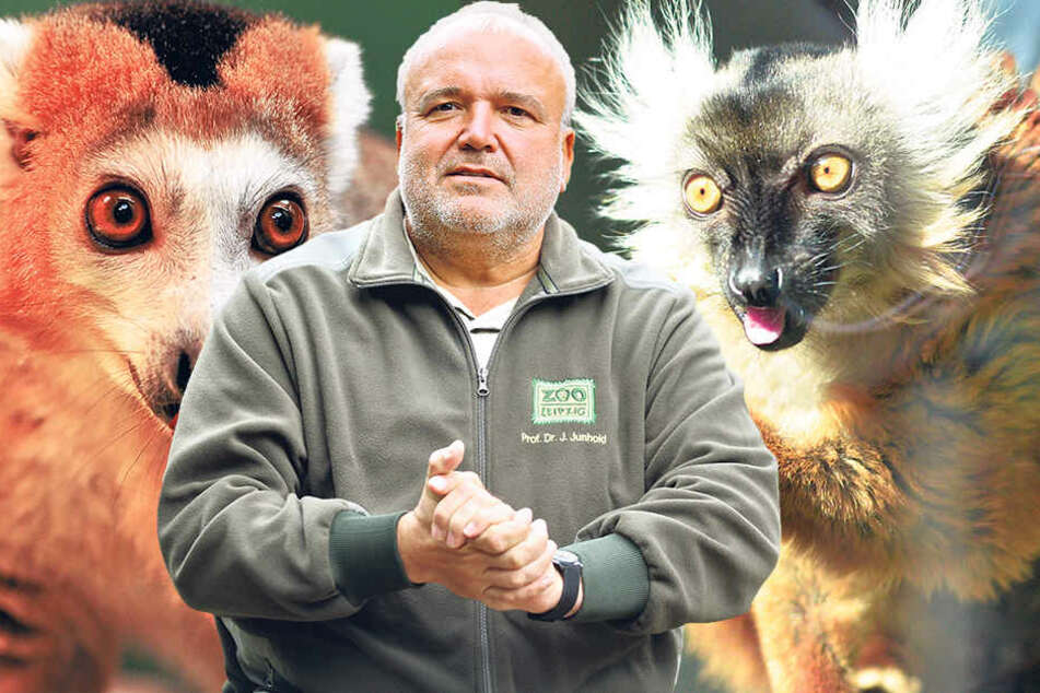 Ist weiter am bauen: Leipzigs Zoo-Chef Dr. Jörg Junhold wird als Nächstes eine Himalaya-Hochgebirgslandschaft für Schneeleoparden und Rote Pandas  eröffnen.