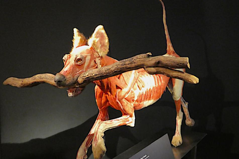 Auch der beste Freund des Menschen, ein Hund, blieb von Dr. Tods Skalpell nicht verschont.
