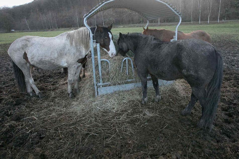 Die Besitzer machen sich Sorgen um die anderen Pferde auf der Koppel.