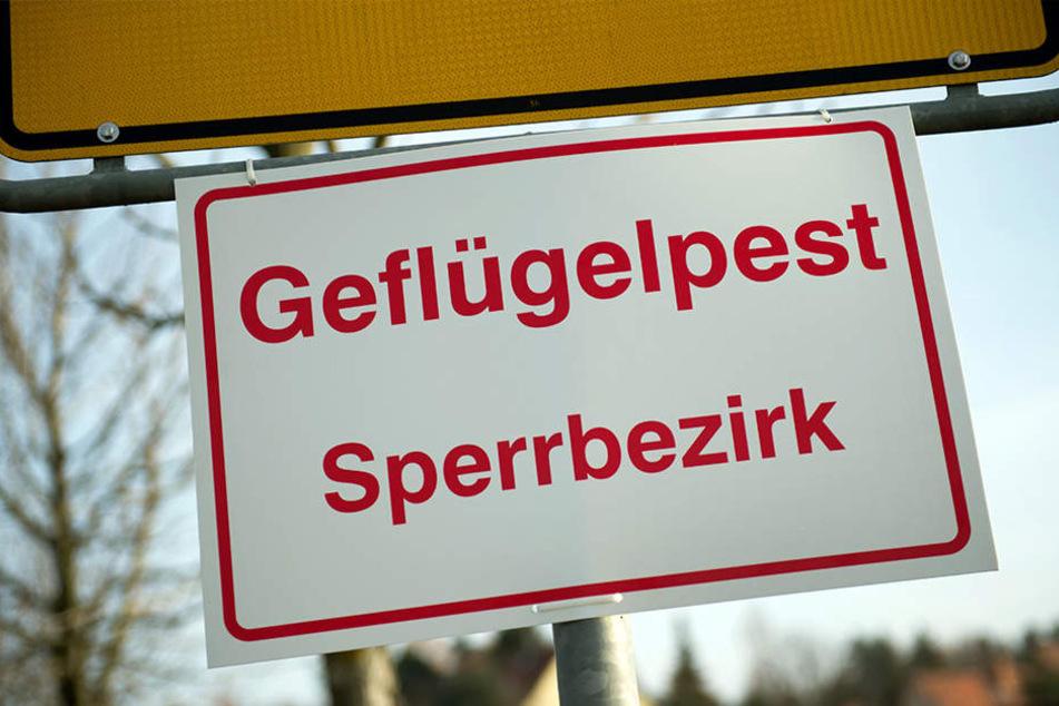 Vorsichtshalber wurden in Paderborn 200.000 Junghennen getötet. (Symbolbild)
