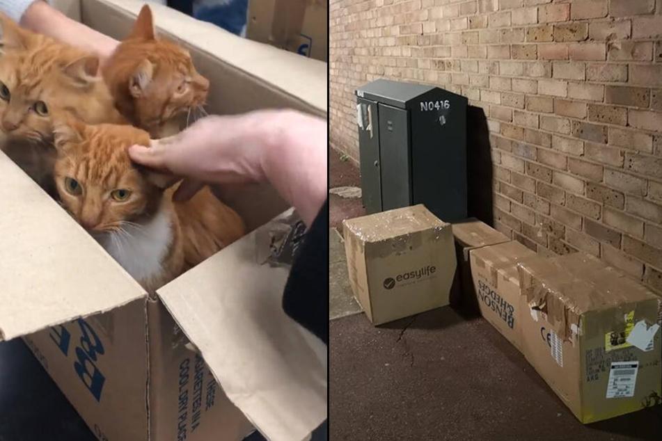 Die versiegelten Kartons wurden in einer Nebenstraße entdeckt. Drinnen hockten die süßen Fellnasen.