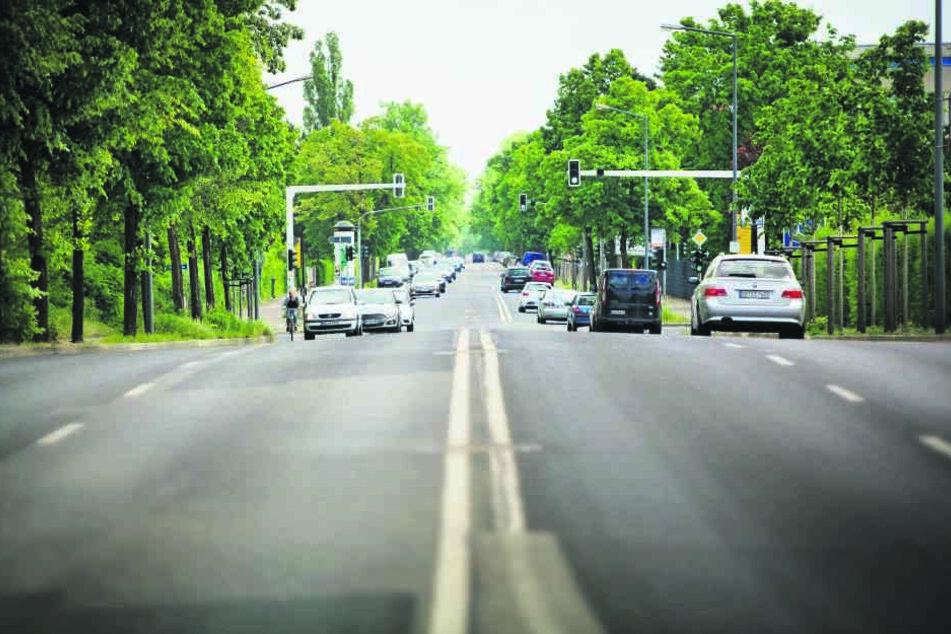 Die Winterbergstraße östlich des Großen Gartens wird auf gut 1000 Metern für  Radfahrer ausgebaut. Statt vier Spuren hat sie künftig nur noch zwei überbreite  Spuren.