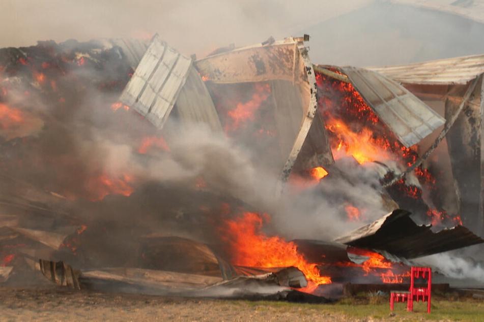 Die Halle auf dem Reiterhof steht komplett in Flammen.