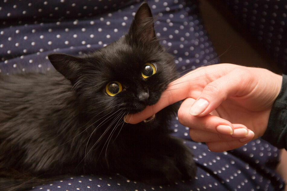 Why cats attack fingers and toes and what to do about it