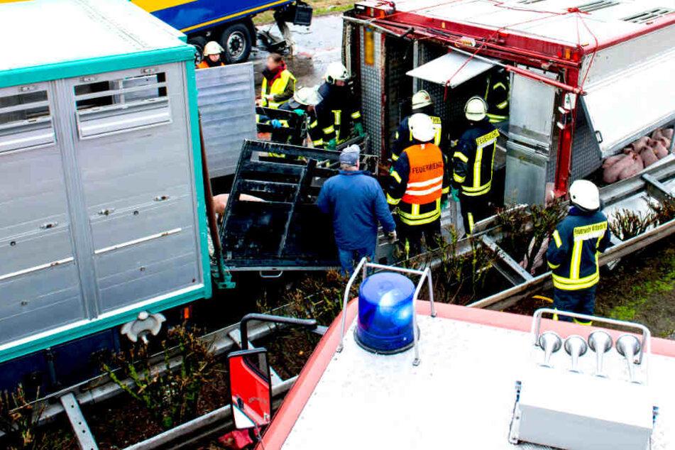 Grausiger Viehtransport-Unfall: Ermittlung wegen fahrlässiger Tötung