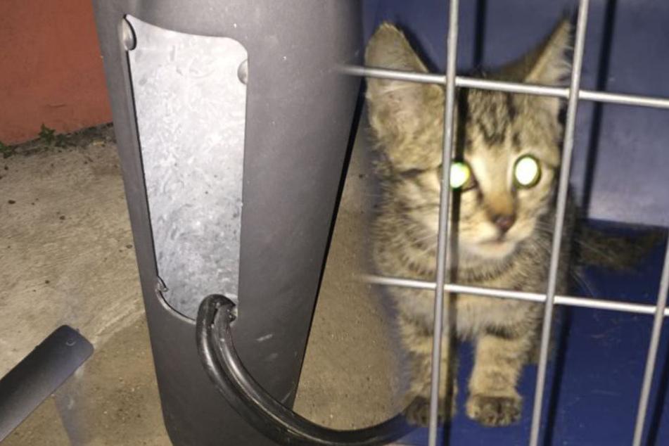 In Mast gefangen: Rettungsdrama um diese kleine Katze