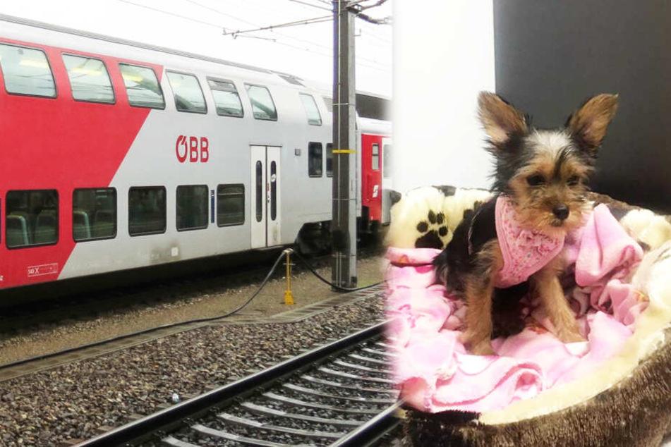 Im Zug ausgesetzt: Hundewelpe auf Toilette eingeschlossen