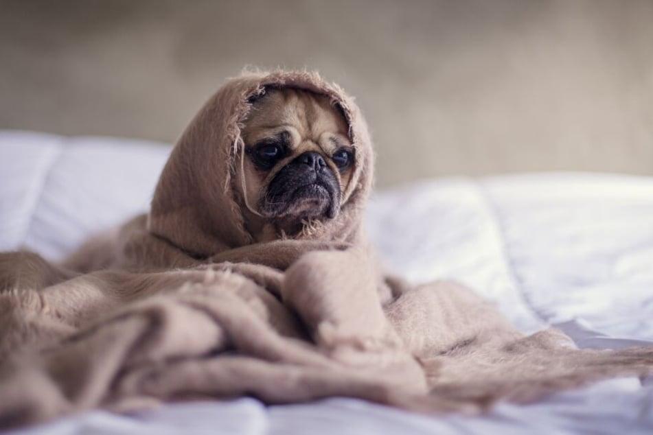 Woran erkennst Du, dass Dein Hund traurig ist?