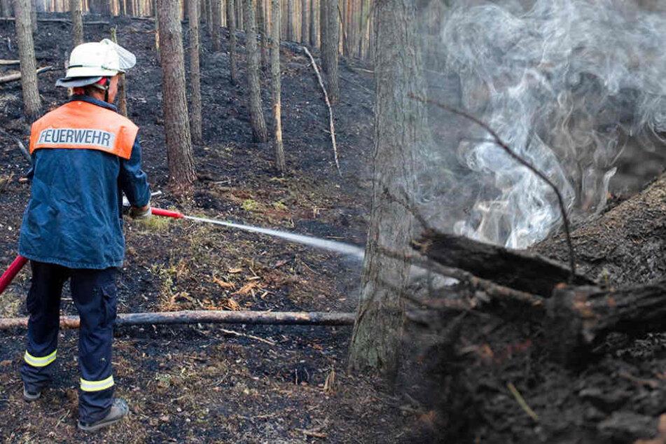 Oftmals legten Personen auch bewusst Brände, wie in der Nähe von Oranienburg, wo die Feuerwehr sogar Kerzen vor Ort fanden. (Bildmontage)