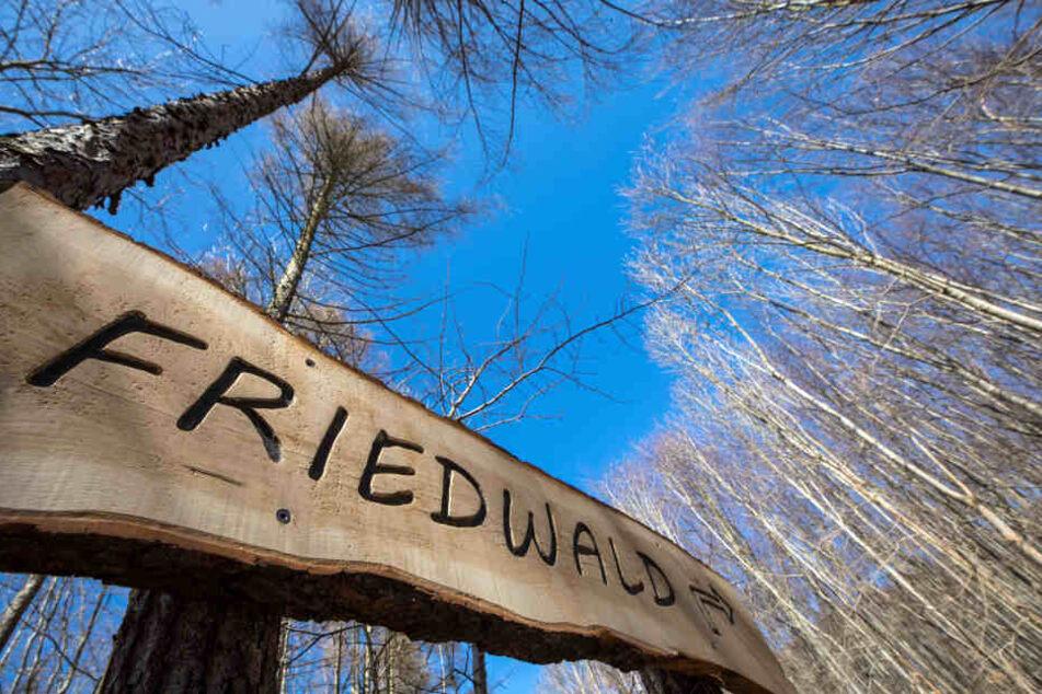 In Thüringen gibt es bislang zwei Waldfriedhöfe.