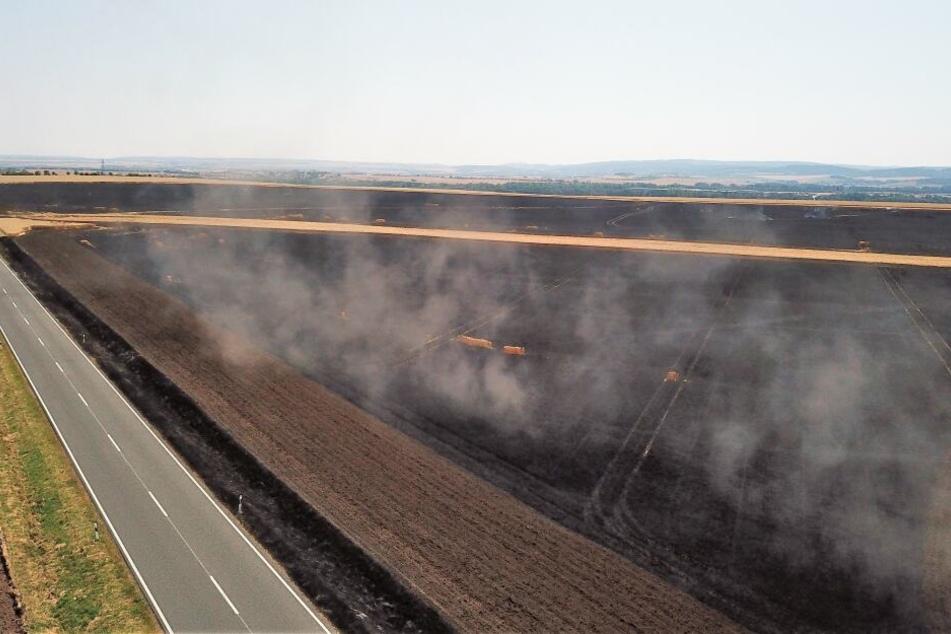 Bei Großrettbach forderte das Feuer große Opfer, das komplette Feld brannte ab.