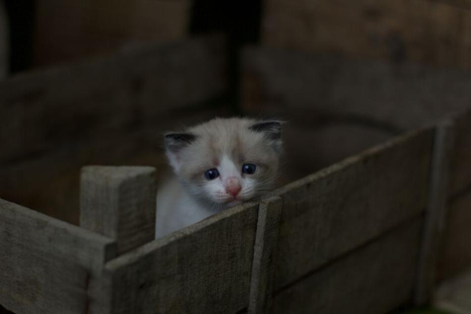 Noch immer werden viele Haustiere lieblos in der Wildnis ausgesetzt.