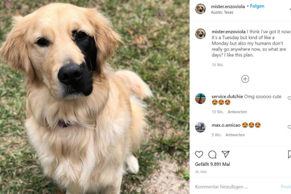 Enzo ist ein kleiner Instagram-Star.