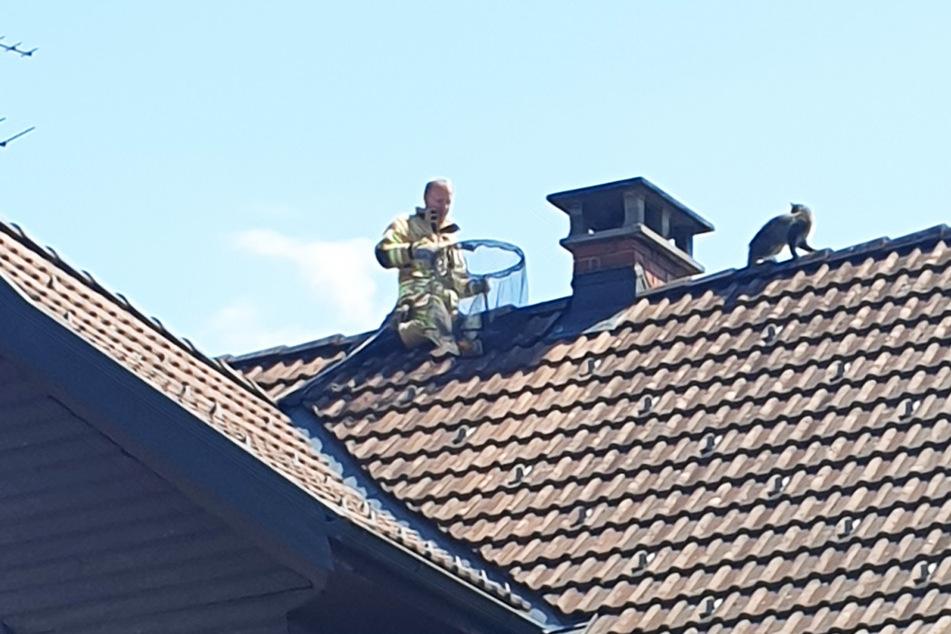 Feuerwehr, Polizei und Tierrettung im Einsatz: Katze sitzt tagelang auf Dach fest