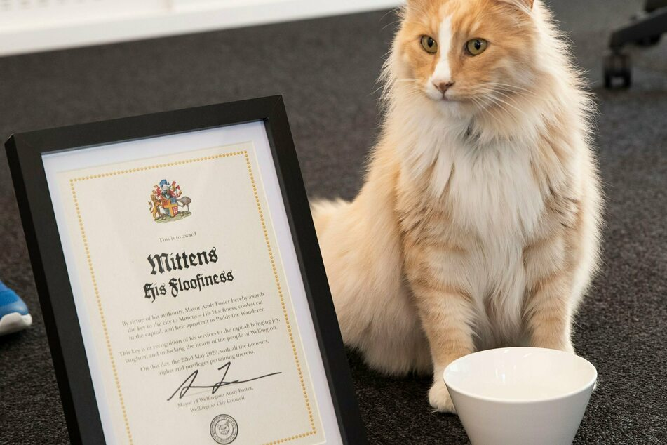 Mittens the cat could soon be voted New Zealander of the Year.