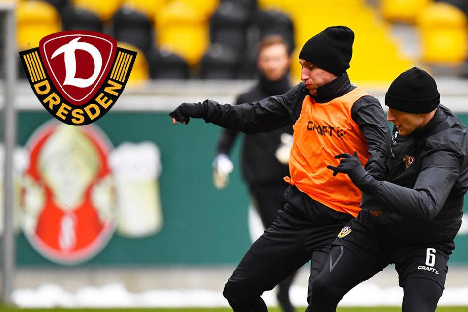 Eintritt frei: Dynamo trifft im Rudolf-Harbig-Stadion auf alte Bekannte