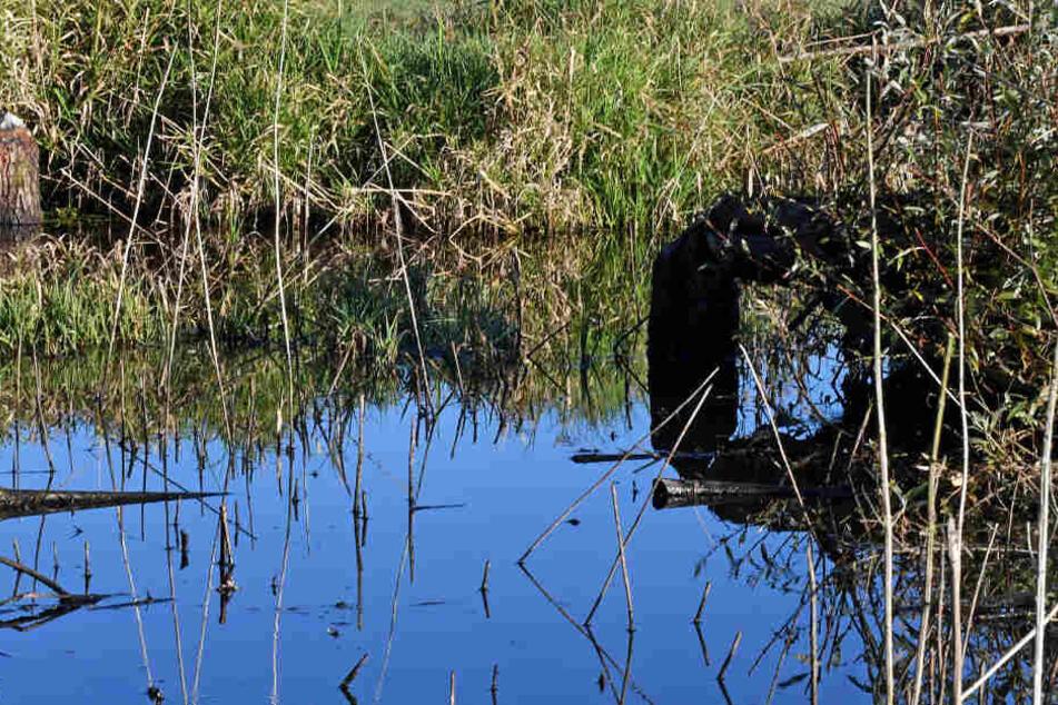 In einem Teich bei Karlsruhe wurde eine Leiche gefunden. (Symbolbild)