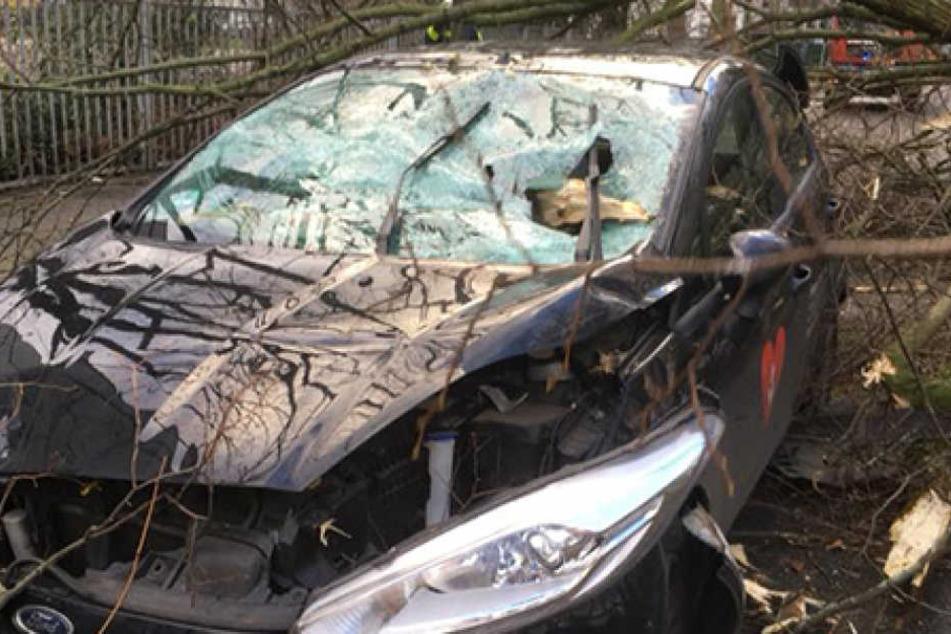 Ihr Auto wurde von dem Baum komplett zerstört.