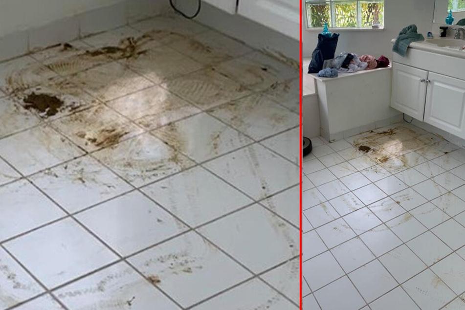 Nicht nur das Bad, sondern die ganze Wohnung war mit Fäkalien verschmiert.
