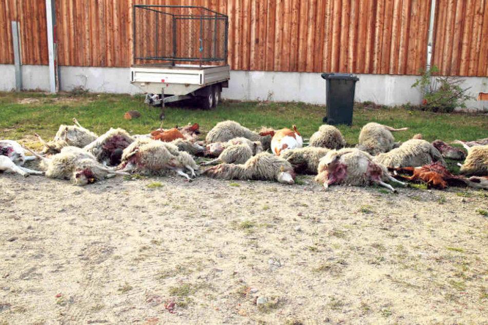 Insgesamt 43 tote Tiere wurden bisher in Förstgen gefunden.