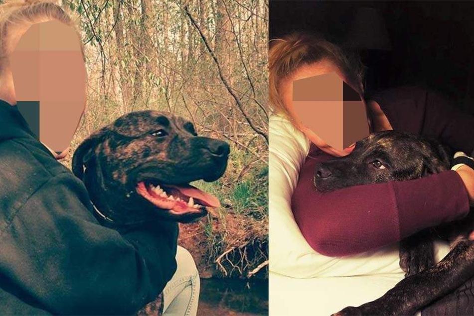 Polizei sicher: 22-Jährige wurde von ihren Hunden zerfleischt