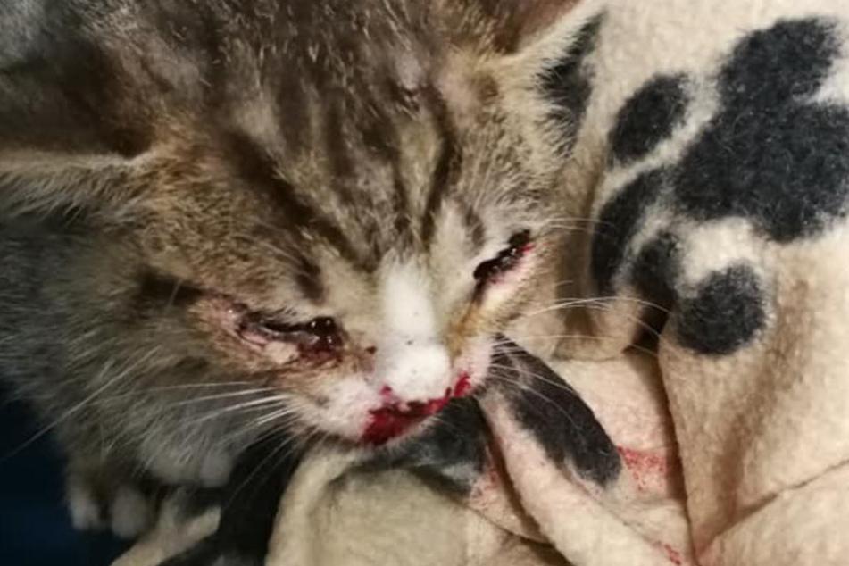 Eines der Kätzchen hat eine stark blutende Wunde am Kopf.