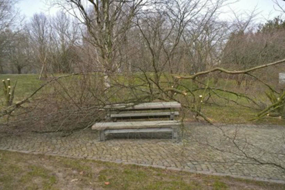 So sieht es derzeit in den Gärten der Welt aus: Mehrere Kirschbäume wurden zerstört.