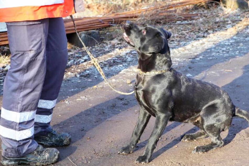 Bei der Suche nach einer Person kamen in Obernzell unter anderem auch Suchhunde zum Einsatz.