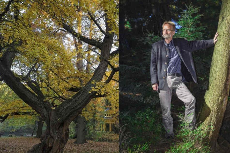 Sächsischer Baum-Professor macht alte Bäume zum Nationalerbe
