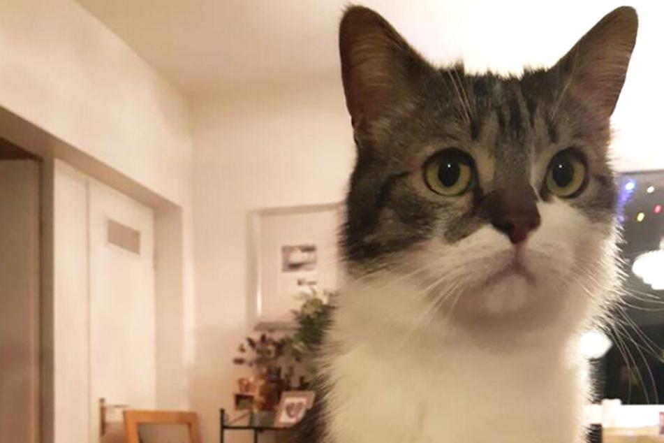Flugzeug verliert Katze auf Flug nach Amerika