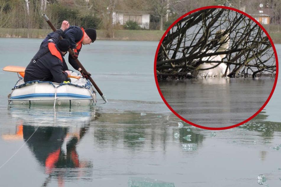 Todesfalle Eis! Hilfloser Schwan friert im See ein