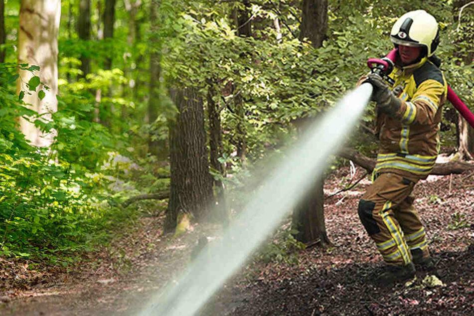 Feuerwehr stundenlang im Einsatz: Flammen in der Dresdner Heide!