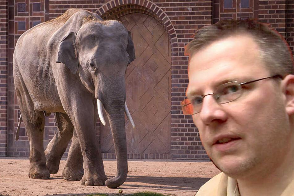 """Wurde von einer Elefantendame verletzt: Der aus """"Elefant, Tiger & Co."""" bekannte Chefpfleger Robert Stehr musste ins Krankenhaus."""