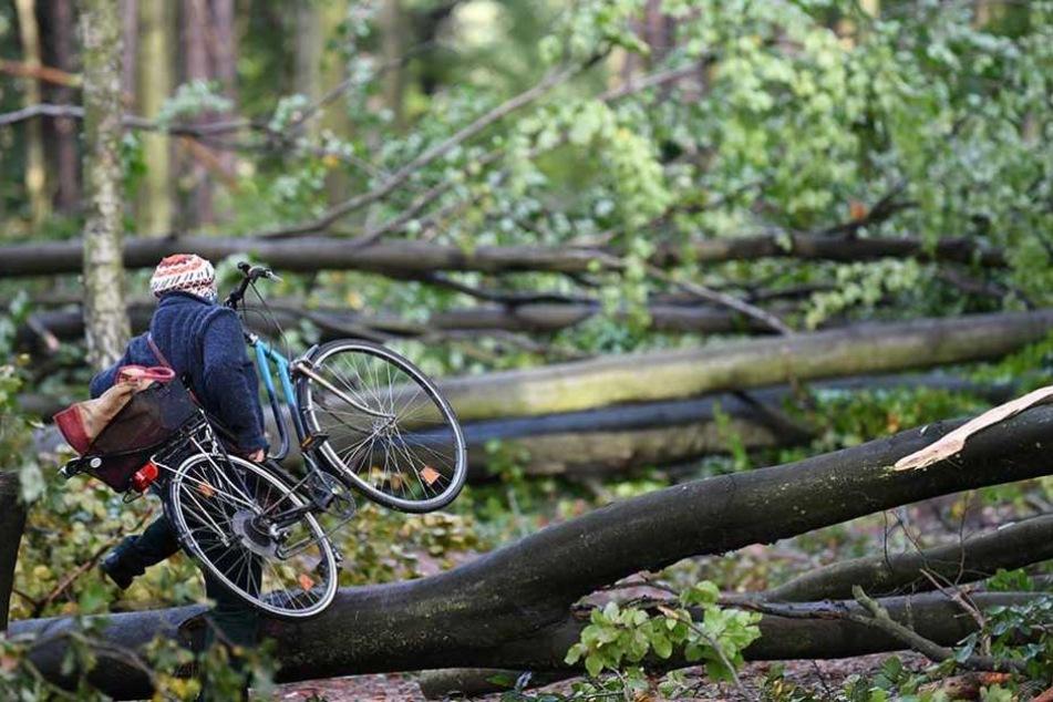 Ein Radfahrer trägt sein Rad über umgestürzte Bäume in einem Wald in Zehlendorf.