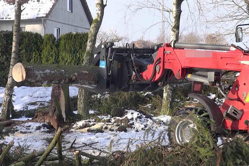 Mit schwerem Gerät und Kettensägen werden die umgestürzten Bäume vom Gelände des Friedhofs entfernt.