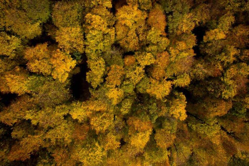 Der Wald in NRW leidet noch unter der Trockenheit des letzten Jahres. (Symbolbild)