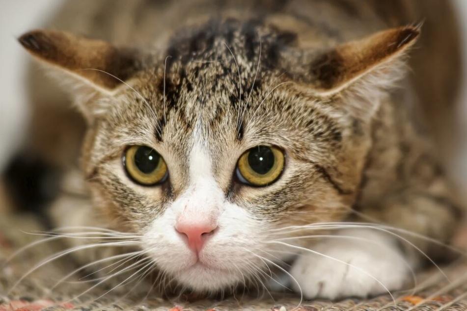 Die Körpersprache von Katzen verrät viel über ihre Gefühlswelt.