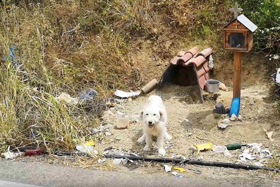 Ein kleiner Schrein wurde für den Hund und sein verstorbenes Herrchen errichtet.