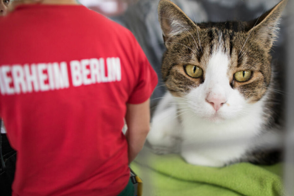 Zu viele Katzen ausgesetzt! Nächstes Tierheim in Not